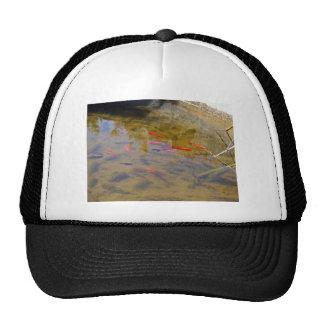 Orange fish group in pond trucker hats