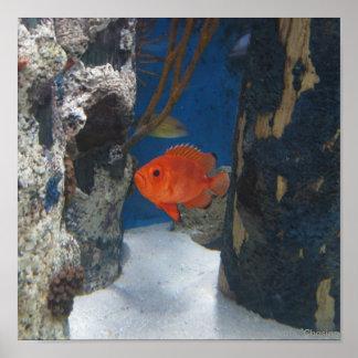 Orange Fishy Poster