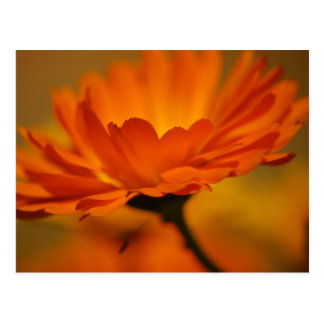 Orange Floral Postcard