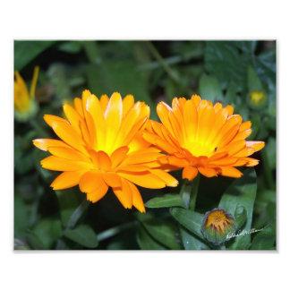 Orange Flower #2204 Photo Print