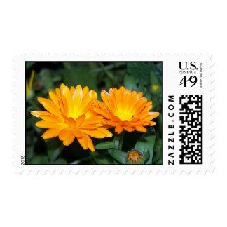 Orange Flower #2204 Postage Stamp