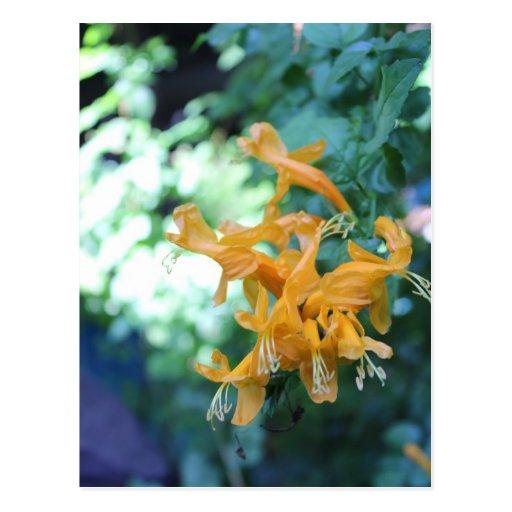 Orange Flower # 2 Postcard