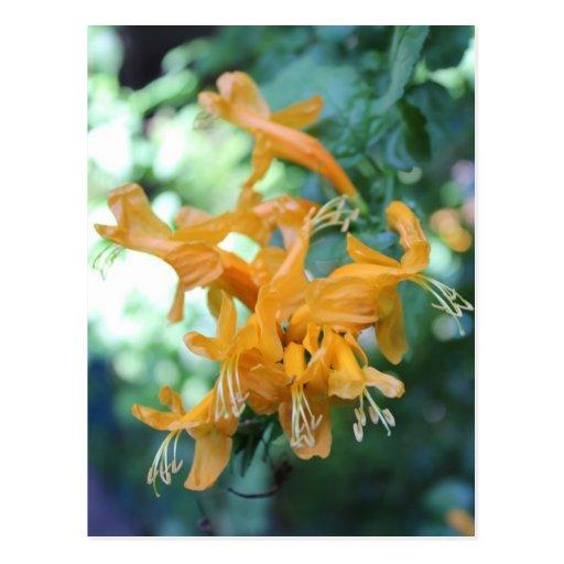 Orange Flower # 3 Postcard