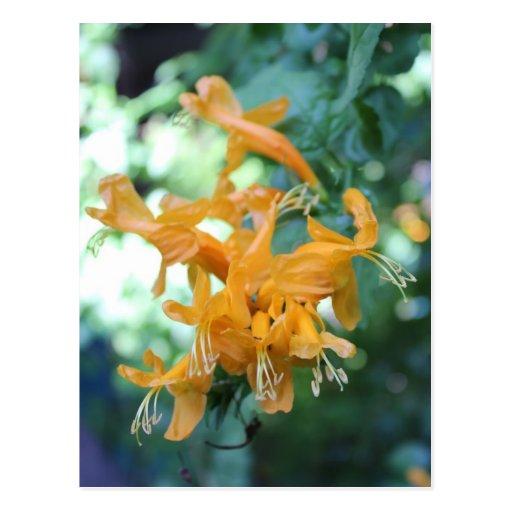Orange Flower # 4 Post Card