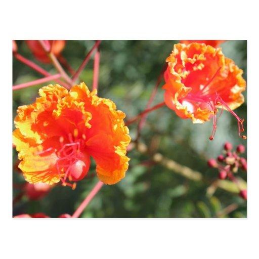 Orange Flower # 7 Postcards