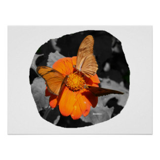 Orange flower and orange butterflies photograph posters