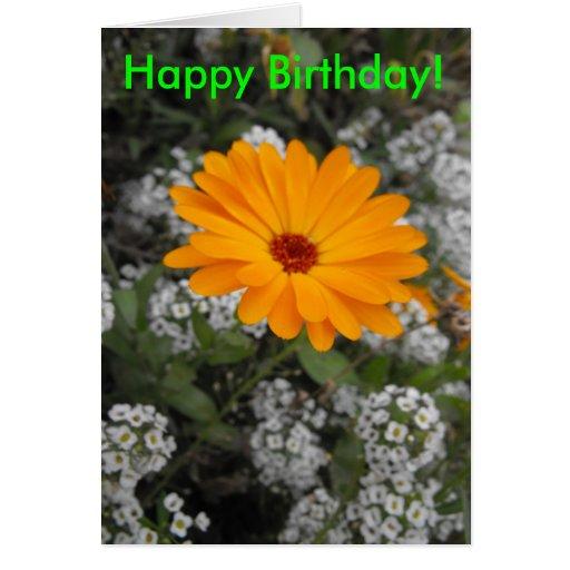Orange Flower Birthday Card