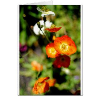 Orange Flower Card