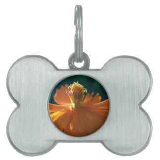 Orange Flower (Close) Pet Tag