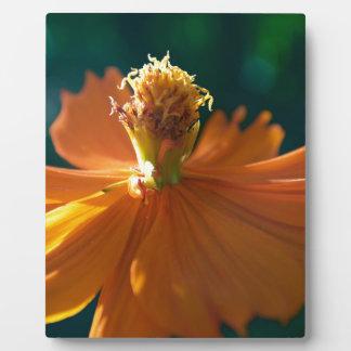 Orange Flower (Close) Plaque