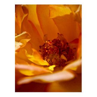 Orange Flower (Close) Postcard