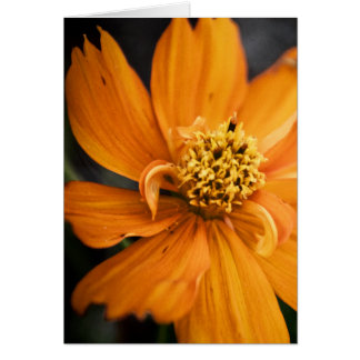 Orange Flower (Gift) Card