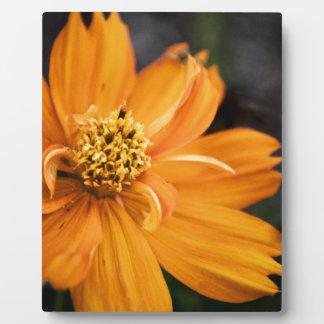 Orange Flower (Gift) Plaque