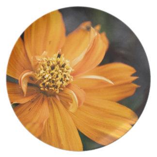 Orange Flower (Gift) Plate