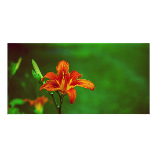 Orange Flower Lily Personalized Photo Card