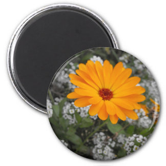Orange Flower Magnet
