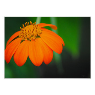 Orange Flower Nature Photography Framable Poster