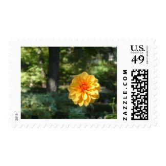 orange flower postage stamps