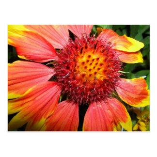 Orange Flower Power Postcard