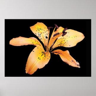 Orange Flower Print