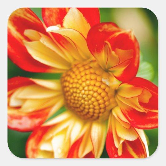 Orange Flower Square Sticker