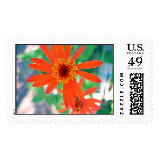Orange Flower Stamp