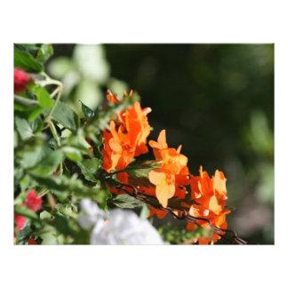 orange flowers against green back letterhead design