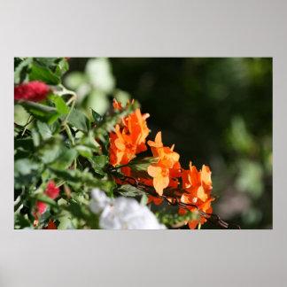 orange flowers against green back poster