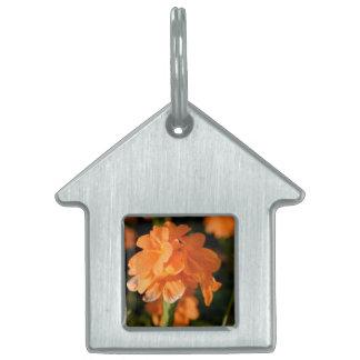 orange flowers close up floral image pet name tags