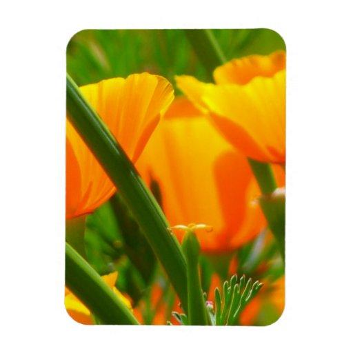 Orange Flowers Iceland Poppies Papaver Nudicaule Rectangle Magnet