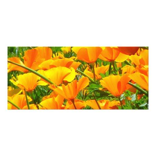 Orange Flowers Iceland Poppies Papaver Nudicaule Rack Card Template