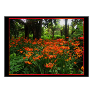 Orange Flowers in Forest Poster