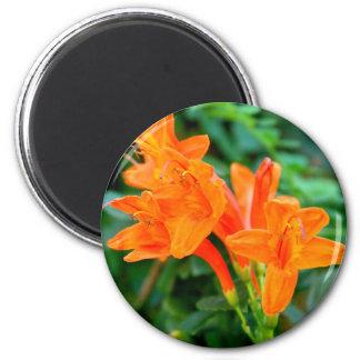 Orange Flowers Magnet