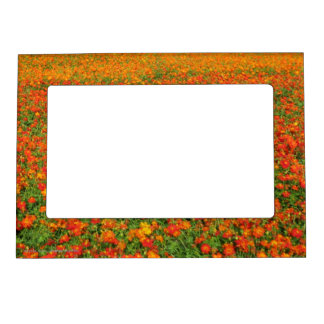 Orange Flowers Magnetic Photo Frames