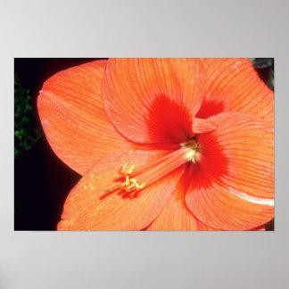 Orange Fond memories flowers Poster