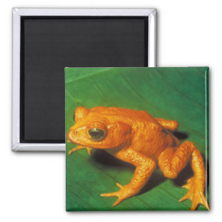 Orange Frog Refrigerator Magnets