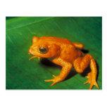 Orange Frog Postcard
