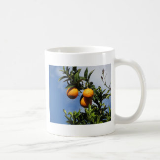Orange fruits hanging on the tree against the blue coffee mug