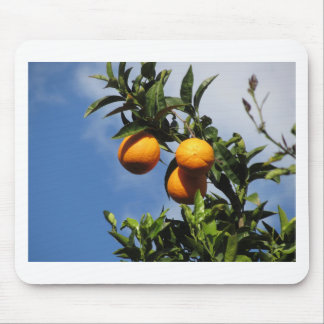 Orange fruits hanging on the tree against the blue mouse pad