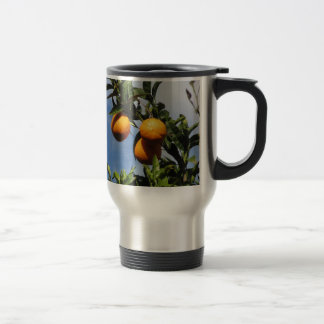 Orange fruits hanging on the tree against the blue travel mug