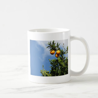 Orange fruits hanging on the tree against the sky coffee mug