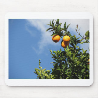 Orange fruits hanging on the tree against the sky mouse pad