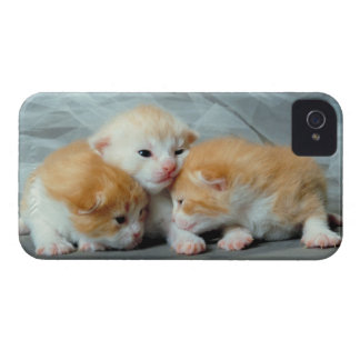 Orange Fur Kittens Case-Mate iPhone 4 Case