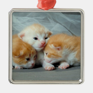 Orange Fur Kittens Metal Ornament