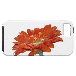 Orange Gänseblümchengerbera-Blume iPhone SE/5/5s Case