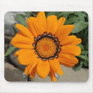 Orange Gazania Flower With Natural Background Mouse Pad