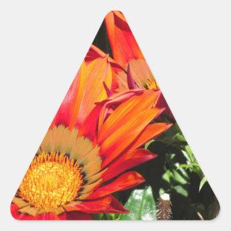 Orange Gazania flowers genus asteraceae Triangle Sticker