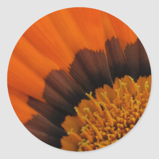 Orange  Gazania Stickers
