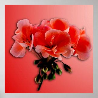 Orange Geranium blossom, Poster