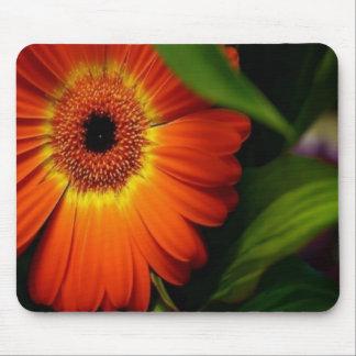 Orange Gerber Daisy Mouse Pads
